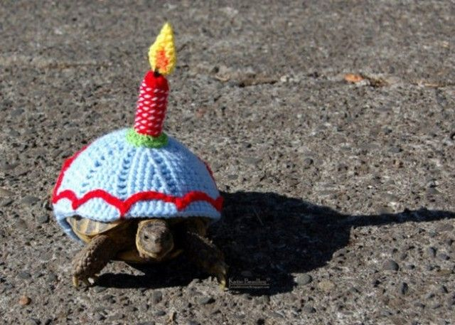 sweater-tortoise-candle_e
