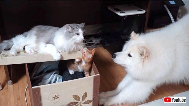 kittenissick2_640