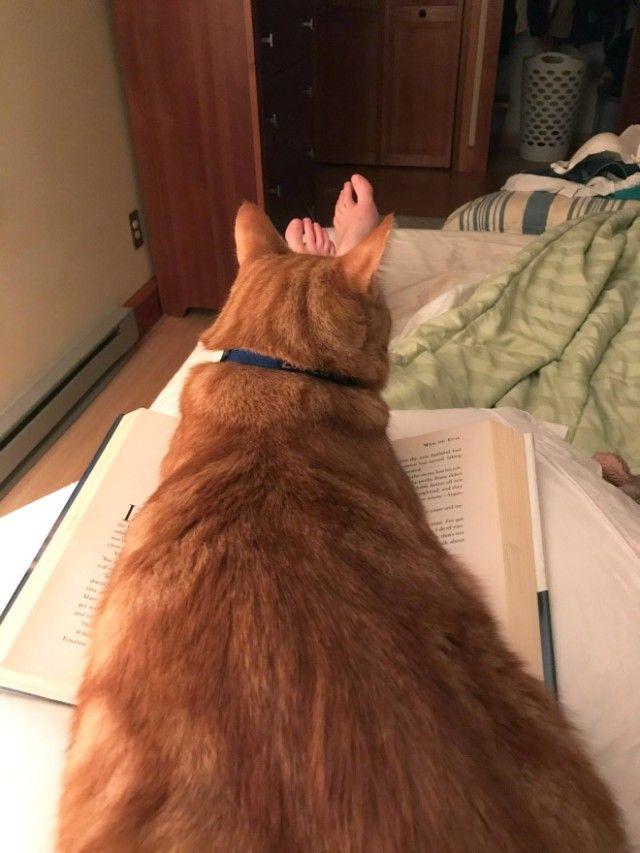 cats-vs-reading13_e