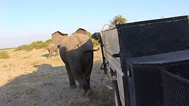 elephantkick3