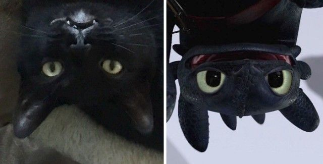 cats-toothless-lookalikes-34-57cec5858d427__700_e