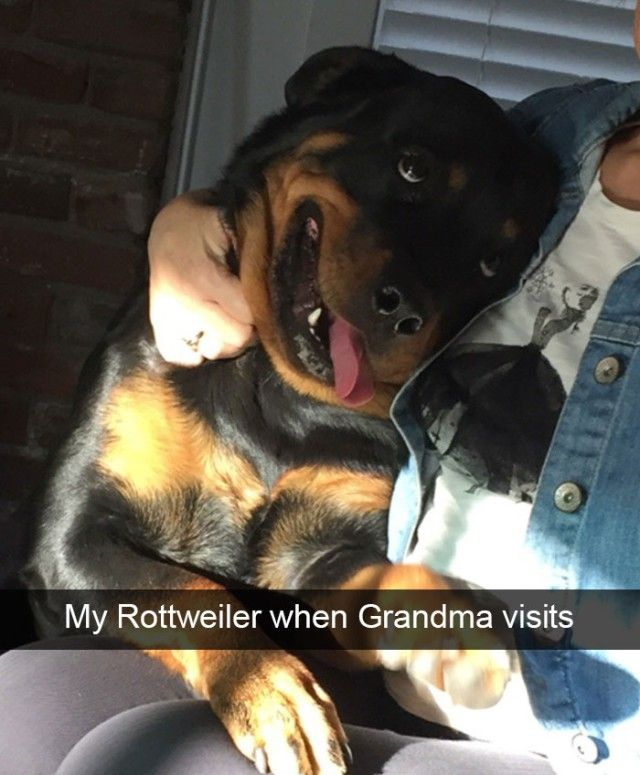 hilarious-dog-snapchats7_e