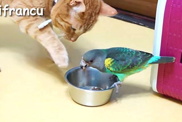 parrotcat4