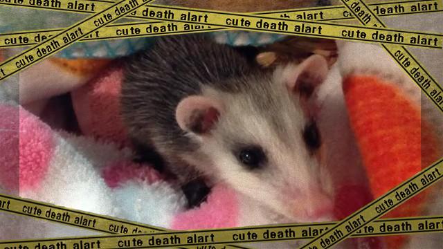 opossum-f_e-frame