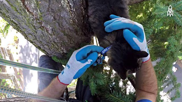 rescuingcats1