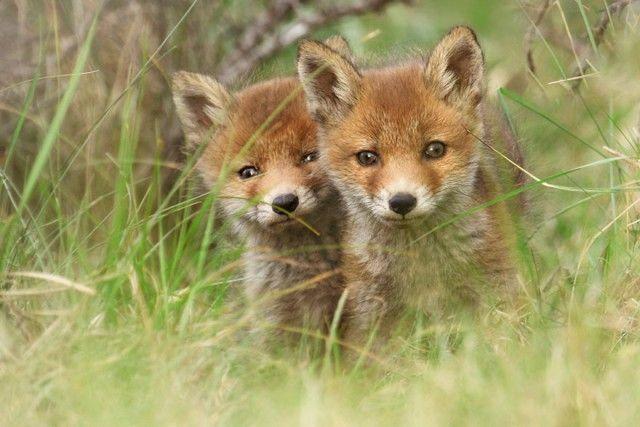 fox5_e