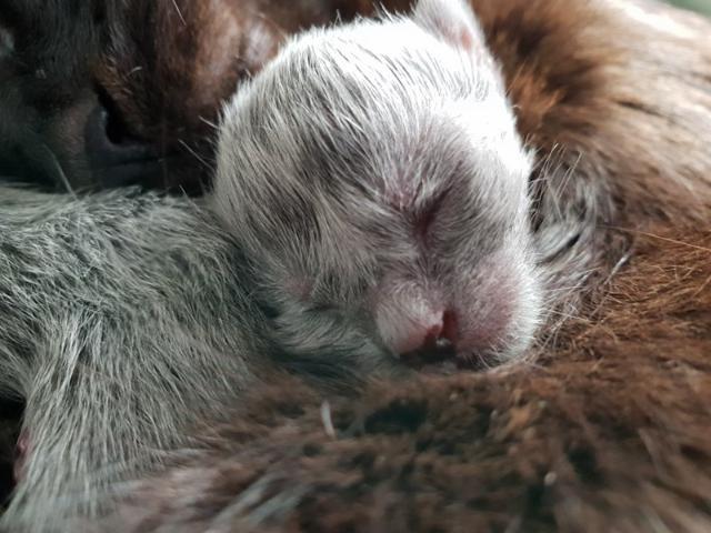 cat-2 [www.imagesplitter.net]