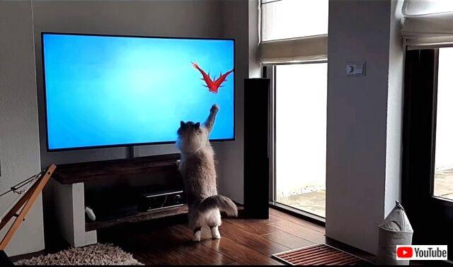 tv4cats2_640