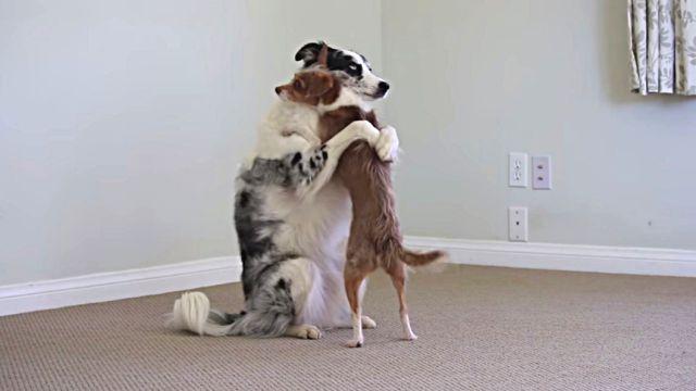 dogtricks7