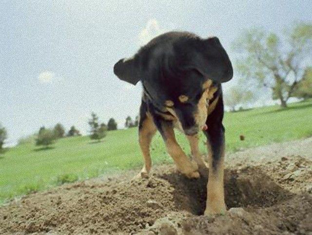 Digging-1_e