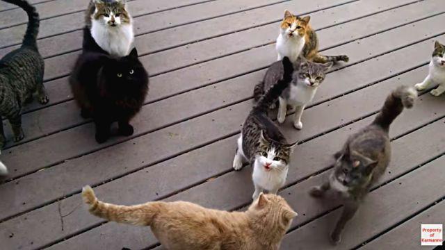 everydaycats4