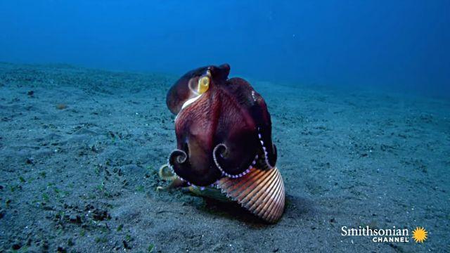 octopus9