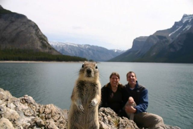 funny-animal-photobombs-1__880_e