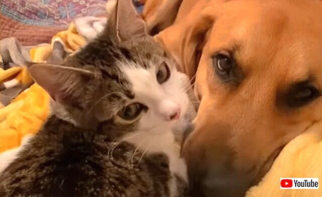 犬と子猫の「はじめまして!仲良くしてね」そして本当に親友になった2匹のいちゃこらっぷりに癒されよう
