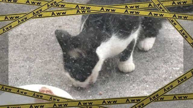 cat-1_e0-frame