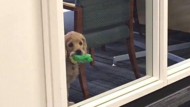 officedog2_e