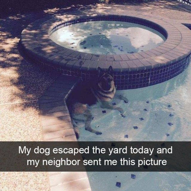 hilarious-dog-snapchats5_e