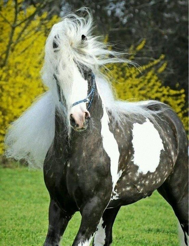 horse12_e