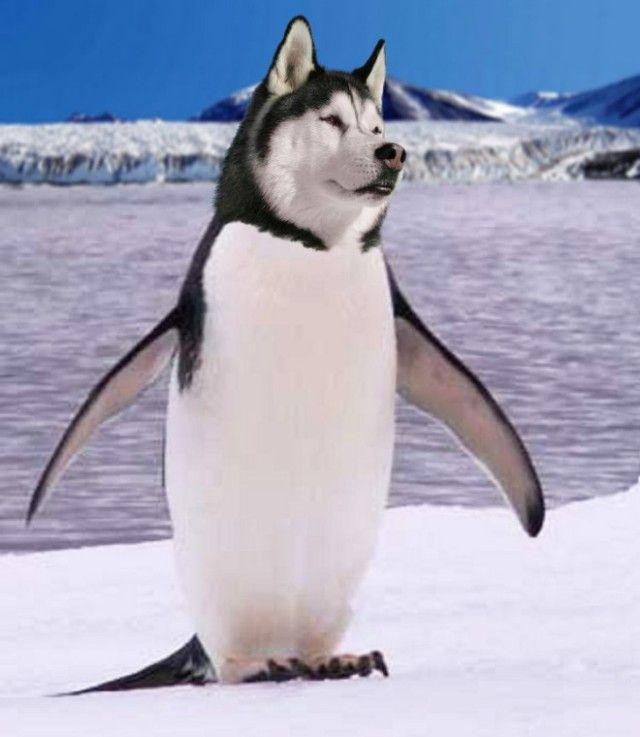 penguin11_e