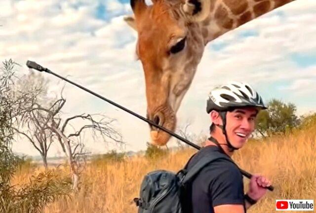 giraffe4_640
