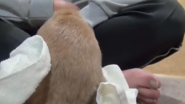 rabbit-5_e
