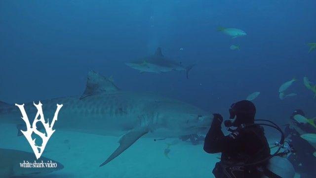 sharksayshi6_e
