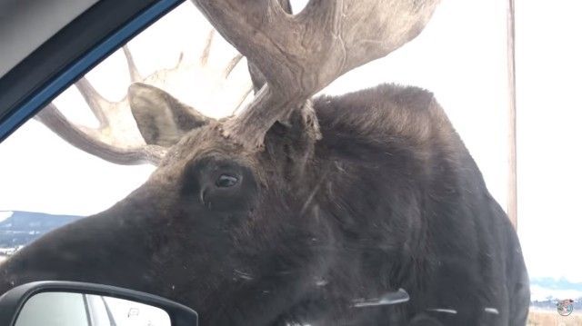 moose6_e