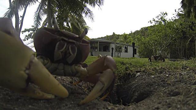 crabstealsgopro4