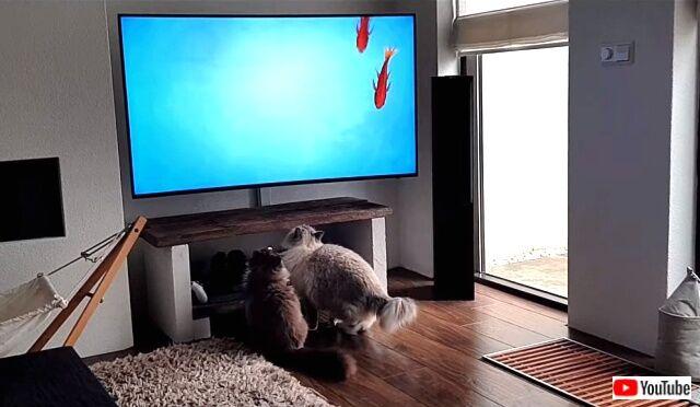 tv4cats4_640