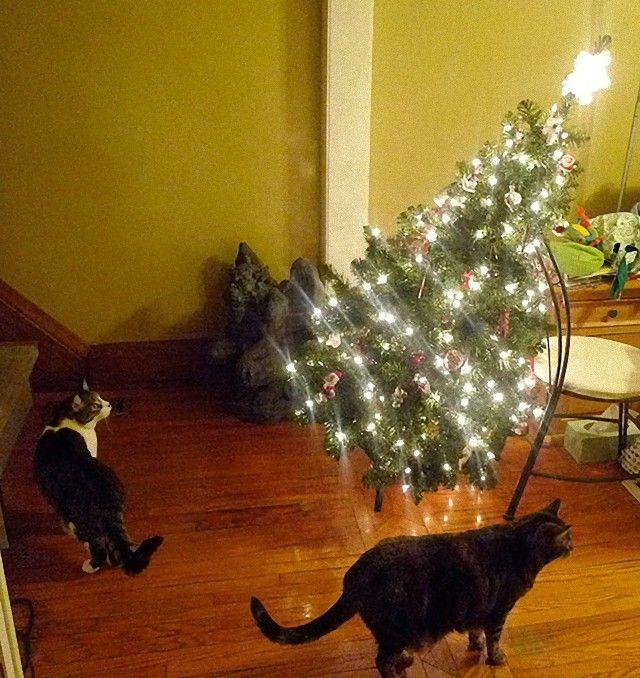XX-animals-destroying-Christmas-15__605_e