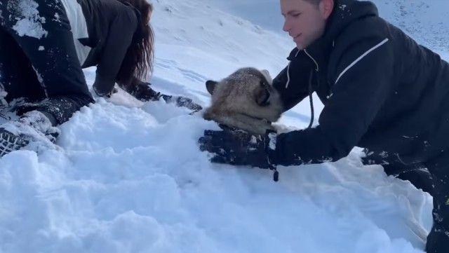 snowdog2_e