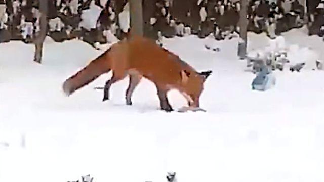 foxntoy0