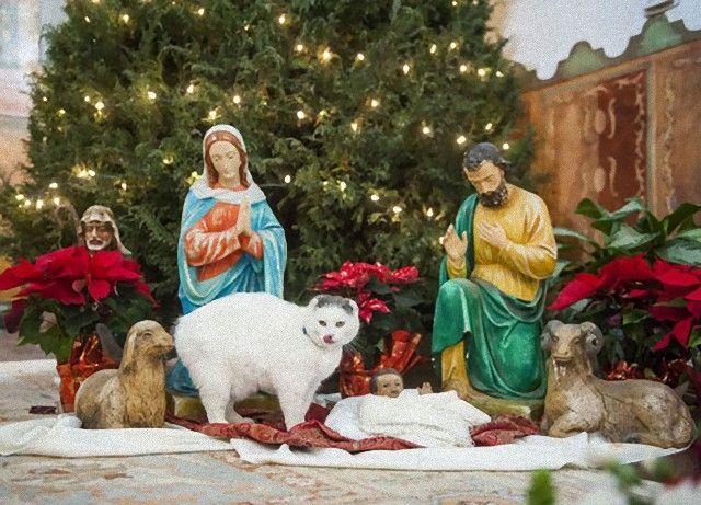 cats-crashing-nativity-scenes-101-5a27f1824692b__605_e
