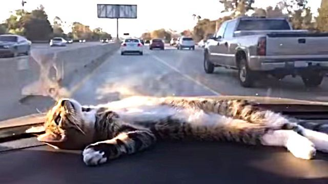 dashboardcat1