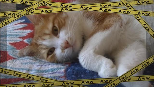 cat [www-frame