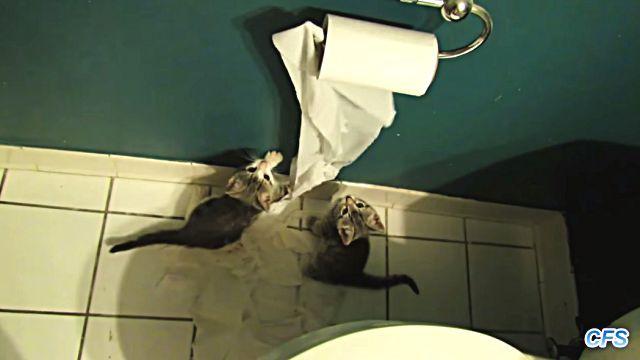 toiletpaper0