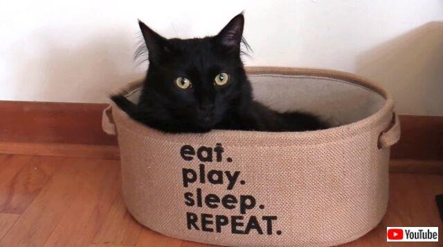 「元気になって良かったニャ!」黒猫コールくんの闘病生活に終止符が打たれてひとまずホッと一安心