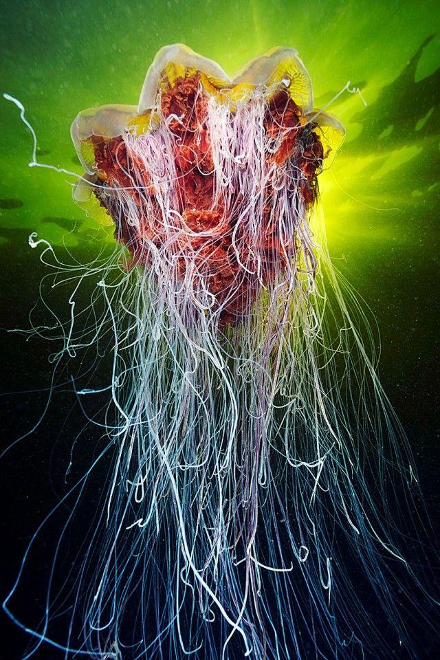 underwater-jellyfish-alexander-semenov-aquatis-29_e