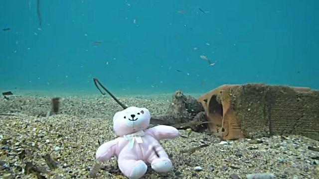 teddynoctopus4