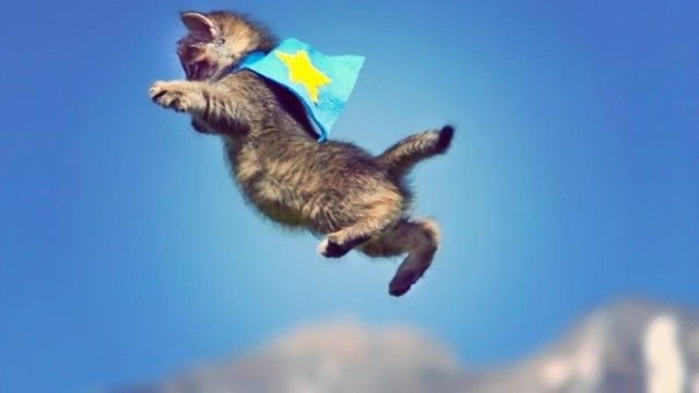 flyingcats7_e