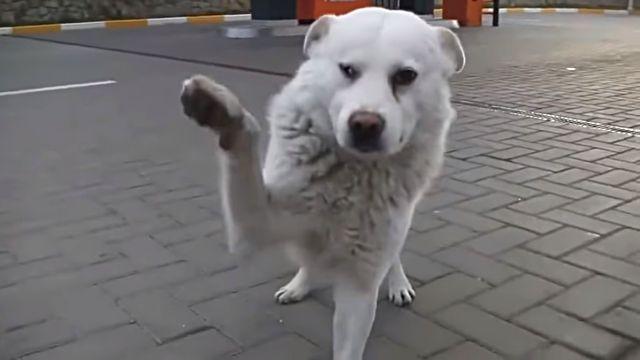 straydog1