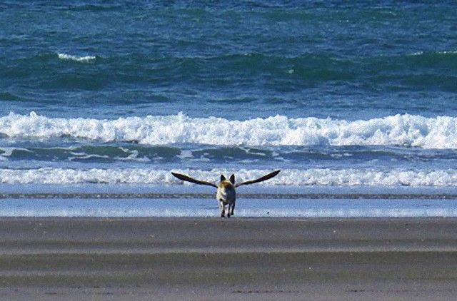perfectly-timed-photos-dogs-8_e