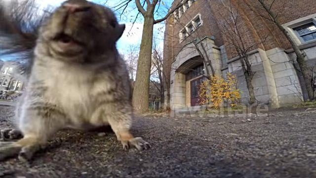 goprosquirrel2