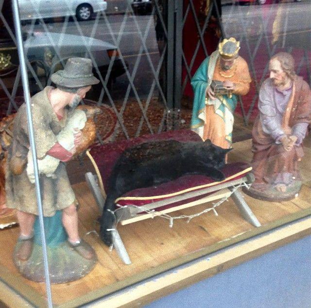 cats-crashing-nativity-scenes-137-5a27eccccfad9__605_e