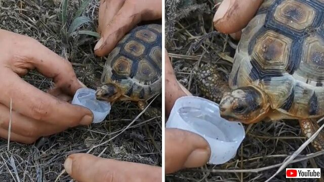 Firefighters-Give-Tortoise-Drink-of-Water_640