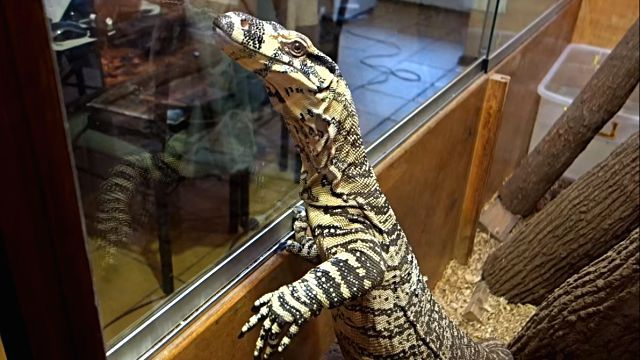 monitorlizard7