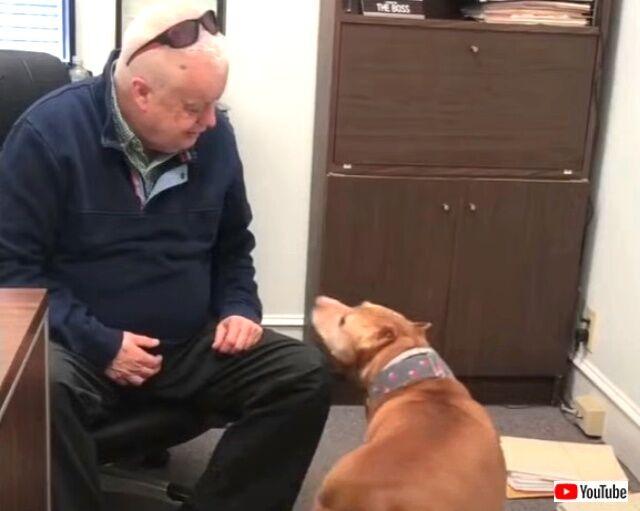 保護犬を職場に連れてきた!「ボス、ボス!一緒に遊ぼうよ!」と、毎日楽しくオフィスで過ごすようになった