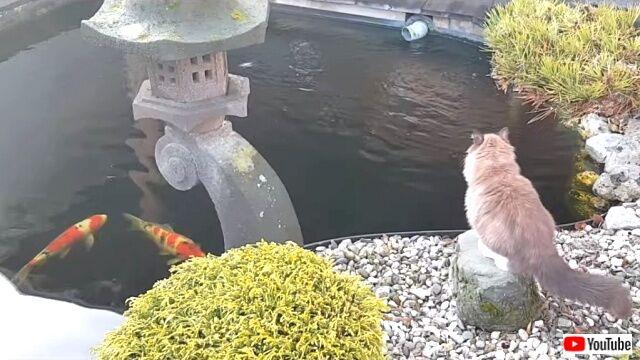 catsingarden0_640