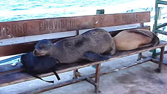 GalapagosSeaLion4