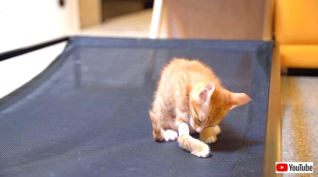 kittenissick4_640